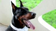 cute dog video