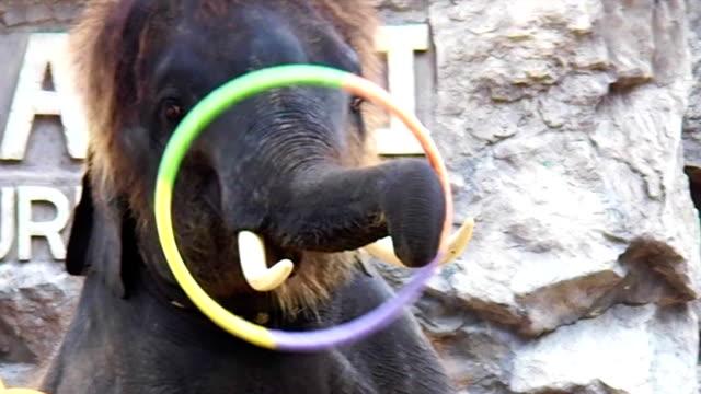 Cute Elephant Playing Hoop video