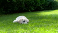 Cute Happy Dog in the Garden - Different Takes video
