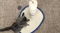 Cute kitten have fun playing with toys on scratching post video