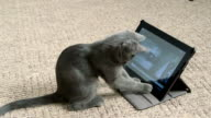 Cute kitten playing with digital tablet computer taking selfie video