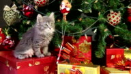 Cute kitten under Christmas tree video