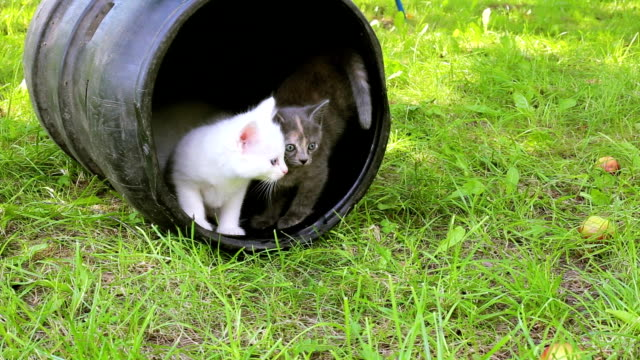 Cute kittens playing outdoor video