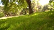 Cute labrador retriever dog walking in park video