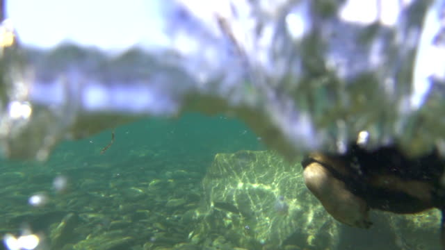 CLOSE UP, UNDERWATER: Cute little dog swimming fast in cold refreshing river video