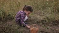 Cute Little Girl With A Basket Picking Up Organic Food. Real People, Rural Scene. video