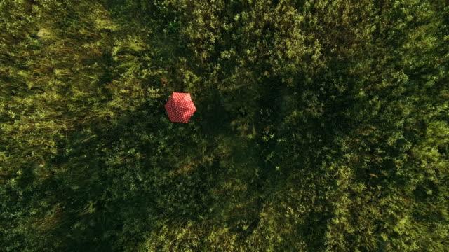 Cute polka dot umbrella moving through a meadow video