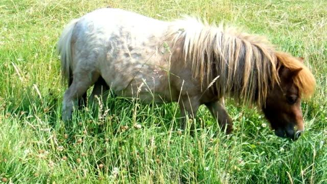 Cute pony video