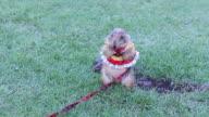 Cute Prairie dog video