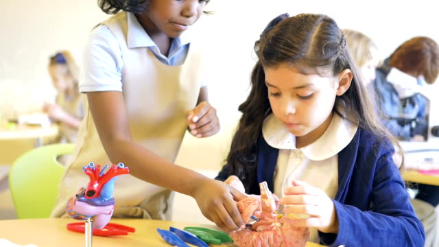 Cute private elementary school science students studying model brain in classroom video