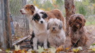 Cute puppies of different breeds of dogs in the kennel. Waiting for its owner video