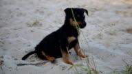 Cute puppy on wet beach sand video