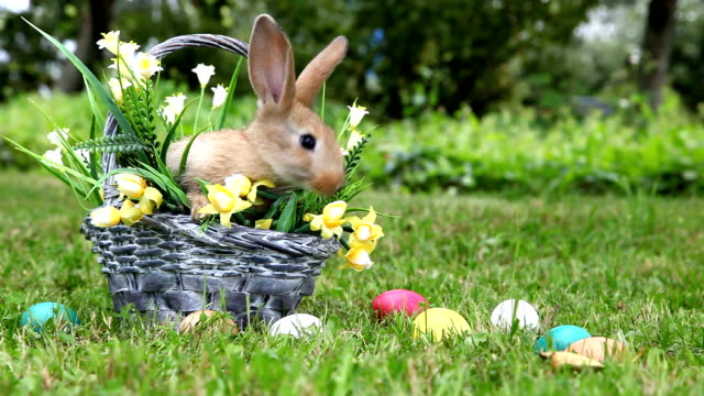 Cute rabbit in the garden video