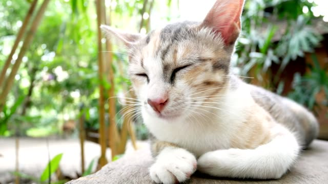 Cute sleepy cat lying on wooden bench video