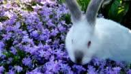 Cute white rabbit video