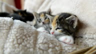 cute young kittens at home video