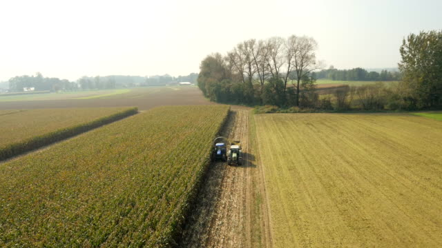 AERIAL Cutting Corn Silage In The Morning video