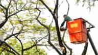 Cutting down a tree video