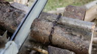 Cutting firewood chainsaw, preparing wood for winter, HD 1080i video