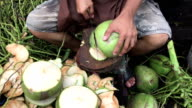 Cutting fresh coconut to get sweet coconut water video