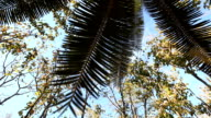 Cycad palm tree in the forest video