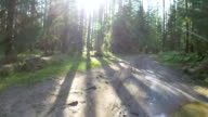 POV cycling in a summer forest video