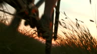 HD: Cycling In The Meadow At Dusk video