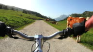 HD Cycling on high mountain pasture video