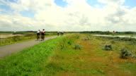 Cyclists on the bike path. video