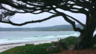 Cypress Tree at a beach video