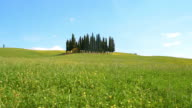 SLO MO Cypress trees in the middle of meadow video