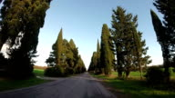 Cypress trees road in Tuscany video