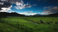 TIME LAPSE: Dairy Cattle under a Summer Sky. video
