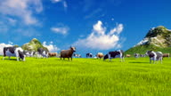 Dairy cows graze on alpine meadow video