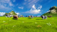 Dairy cows on green alpine meadow video