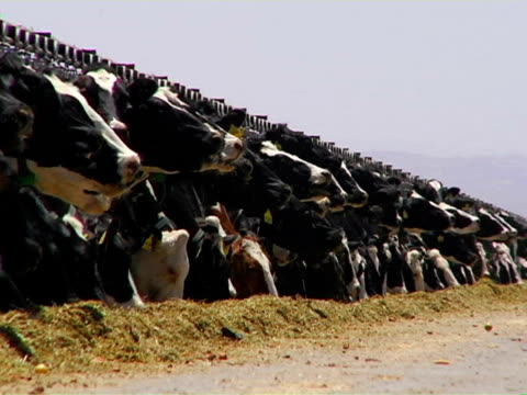 dairy farm 01 video