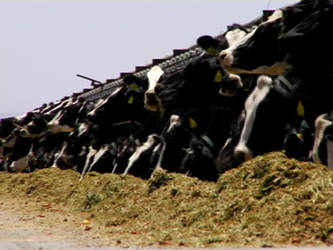 dairy farm 02 video