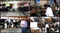Dairy Farming - Milk Production video