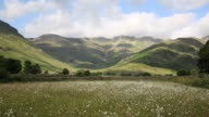 Daisy field with mountains blue sky and clouds Langdale Valley Lake District Cumbria in summer video