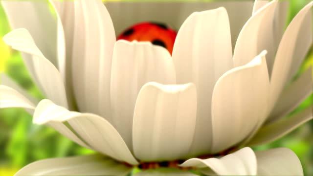 Daisy flower with a ladybird video