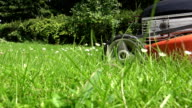 daisy flowers in meadow and gardener lawn mower cut grass. FullHD video