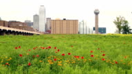 Dallas Texas City Skyline Metro Downtown Trinity River Wildflowers video