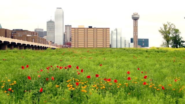 Dallas Texas City Skyline Metro Downtown Trinity River Wildflowers video