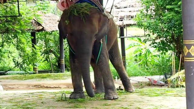Dancing Elephant video