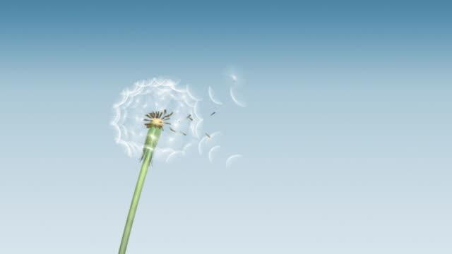 Dandelion 01 Blow on Blue Gradient video