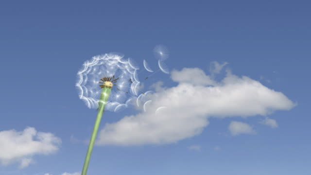 Dandelion 01 Blow on Sky video