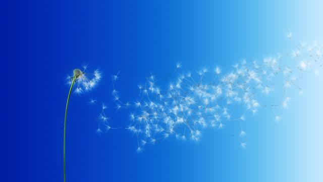 Dandelion Blue Gradient (with Matte) video