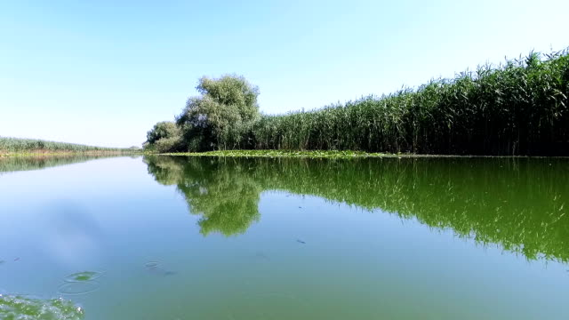 Danube Delta Forested Wetlands In Motion video