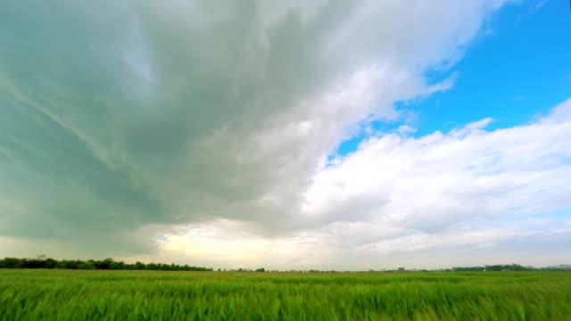Dark Clouds over a Green Wheat Field video