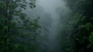 Dark Fog in Forest video